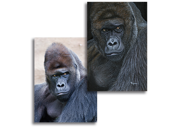 Reference photos for gorilla commission